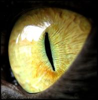 Cats eye by NaturesHaven