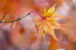 Autumn leaves 6 by TheEtherealSoul