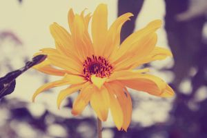 Yellow Flower by LilP0p