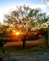 Shady Mesquite At Dusk. by theblueofmyoblivion