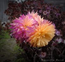 Autumn Flower by AlexBlood