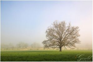 Misty Morning by ThisWomanWanders