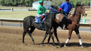 Racehorse Stock 37 by Rejects-Stock