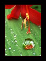 After the rain by Maceo-x-
