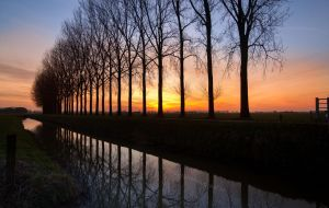 Reflectoin of the morning trees......... by Betuwefotograaf
