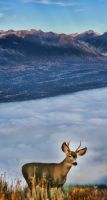 Another Deer Panorama 3 by skip2000
