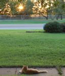 King Louie Enjoys a Sunset by wiz2525