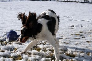 Dog action shot by Sinned-angel-stock