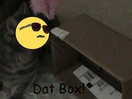 Dat Box by XGirlDeathX