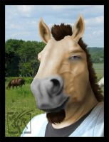 Byrne Canton - Anthro Horse Manip by Toledo-the-Horse