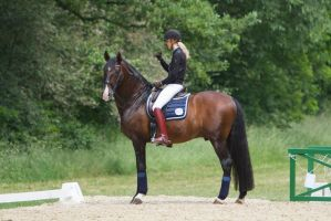 Short Break Lusitano Dressage Stock by LuDa-Stock
