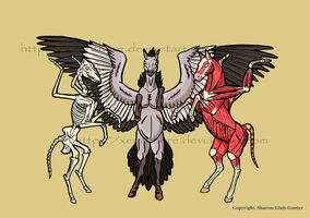 Pegasus anatomy by Xenothere