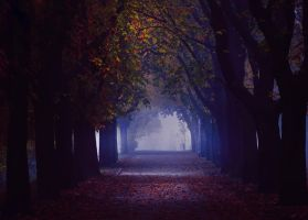 the last path by PinkaPhotography
