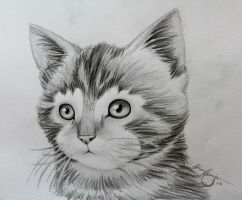 Animal Drawing - The Kitten by LucaHennig