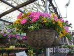 Hanging Flowers at a Store by Artlune