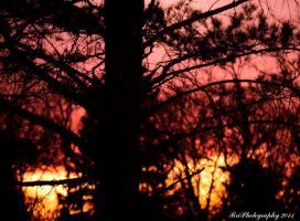October Pine by PhotographsByBri