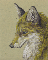yellow Fox by DaphneBlake