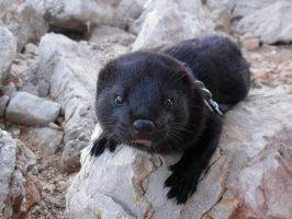 My mink on a rock by Younae