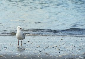 Seagull by Purple-Ephemerality