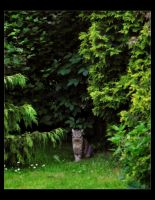 Watching Me by Forestina-Fotos