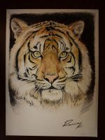 Tiger - Colored pencils on paper by Kriscorpion
