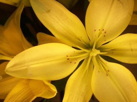 Flower Series-  Lily Two by f32
