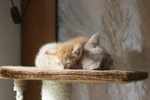 Two cats sleeping together 2 by PeterHebels