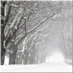 A little snow today... by Yancis