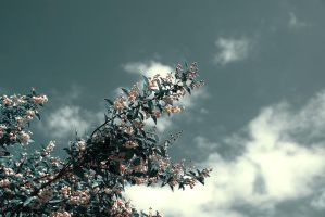 .:.Touch the sky II.:. by Ailedda