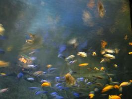 Aquarium 3 by Polly-Stock