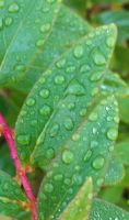 Dew Drops 3 by HK-118