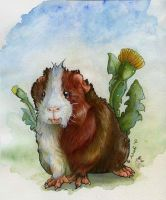 Guinea pig and Dandelions by A-shanti