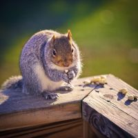 Untitled Squirrel Photo II by nprkr