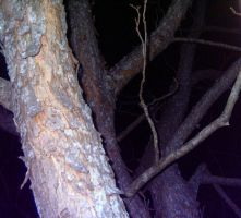 Tree at night 2 by KnK-stock