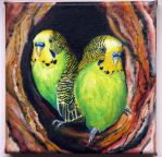Budgies Wellensittichen Hullaamos papagaajok by IronAries