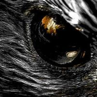 animal eye by starred4life