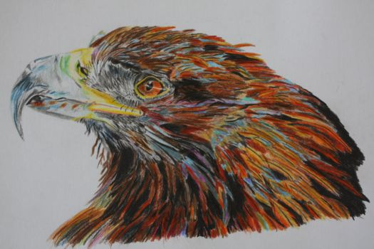 Day 4 and 5: Golden Eagle by silverwinf