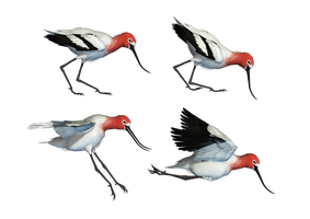 Wading Bird 01 PNG Stock by Roys-Art