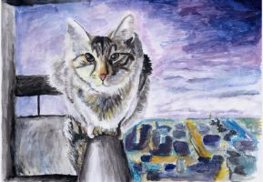 A cat on the ledge by florinka