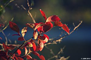 The Beauty of Fall by JDM4CHRIST