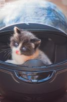 Biker Kitten by MRBee30