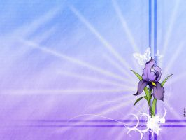 flower: iris by st3to