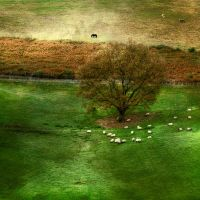 A life of sheeps... by ChristineAmat