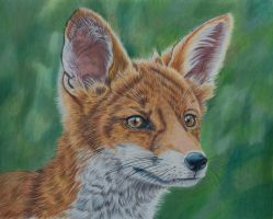 Reynard the Fox by Sarahharas07