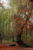 Old Man Willow by HoremWeb