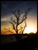 Sunset Tree by wolmers