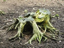 Dead roots by gsdark-stock