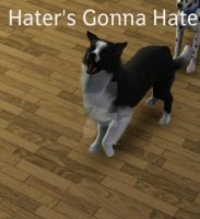 Hater's Gonna Hate by Selena-the-cat