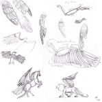 Bird Wing Sketch Dump by Kivusa