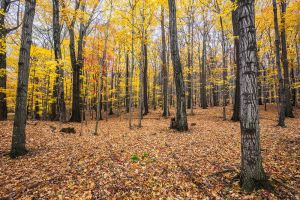 Yellow Forest by Mashuto